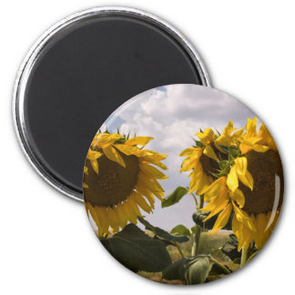Sunflower Bunch Magnet