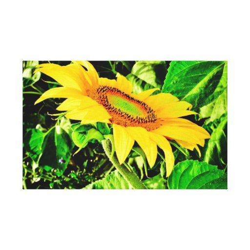 Sunflower Canvas Prints