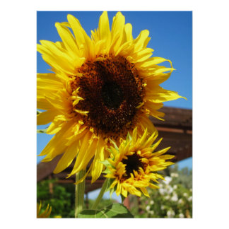 Sunflower Canvas Poster