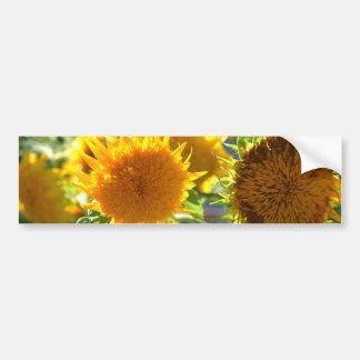 Sunflower Car Bumper Sticker