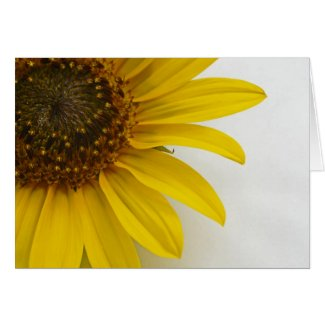 the meaning symbolism of sunflowers sunflower card. Black Bedroom Furniture Sets. Home Design Ideas