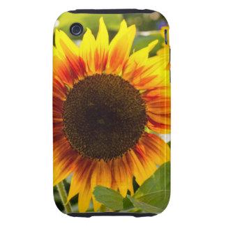Sunflower iPhone3 Case