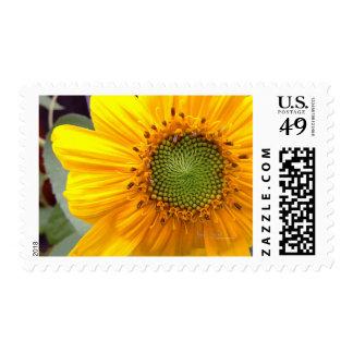 Sunflower Center Postage