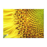 Sunflower close up canvas stretched canvas print