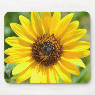 Sunflower Close Up mouse pad