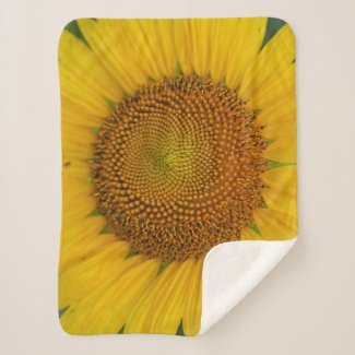 Sunflower close-up on sherpa blanket
