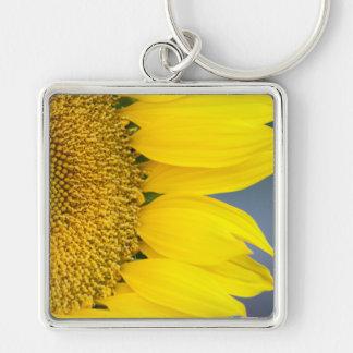 Sunflower Close Up Photograph Keychain