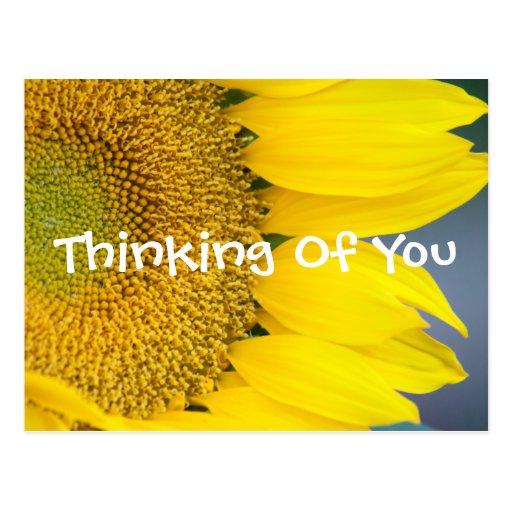 Sunflower Close Up Photograph Postcard