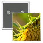Sunflower Close Up Pinback Button