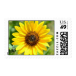 Sunflower Close Up stamps
