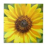 Sunflower Close Up tile