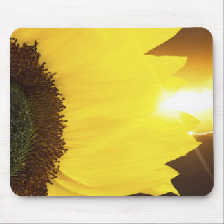 Sunflower closeup and sunset lighting mouse pad