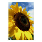 Sunflower closeup by tdgallery poster