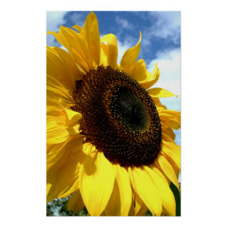 Sunflower closeup by tdgallery print