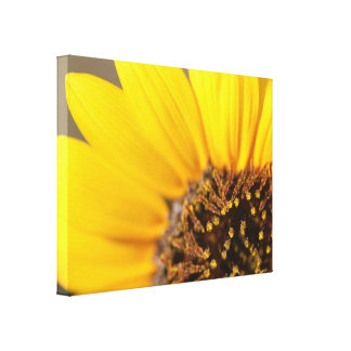 Sunflower Closeup Macro View Gallery Wrapped Canvas