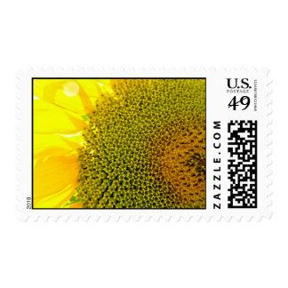 Sunflower Closeup Photography bright yellow digita Stamp
