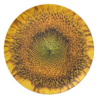 Sunflower closeup plate