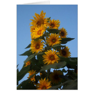 Sunflower Cluster Notecard
