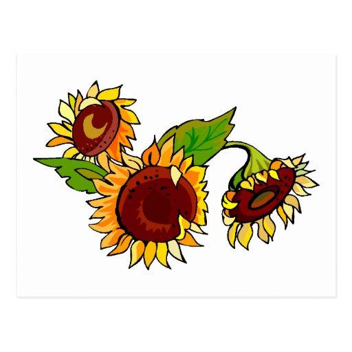 Sunflower Cluster Postcards