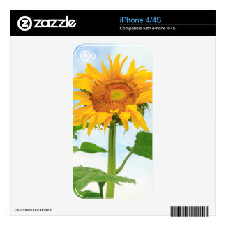 Sunflower, community garden, Moses Lake, WA, USA Decal For iPhone 4