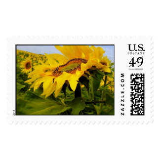 Sunflower dancing in the Sun Postage