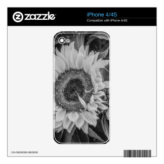 Sunflower Decal For iPhone 4