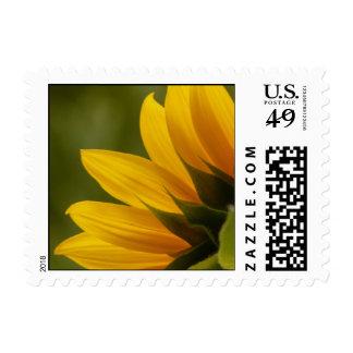 Sunflower Detail Stamp