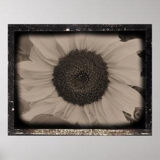 Sunflower Diatrope III Poster