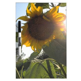 Sunflower Down Dry-Erase Whiteboard