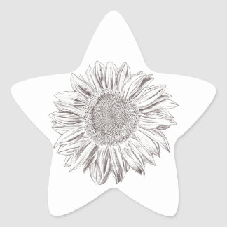 Sunflower drawing in Pen and Ink Star Sticker