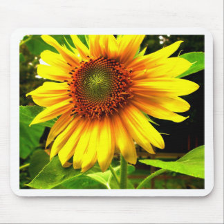 Sunflower Dreams Mouse Pad