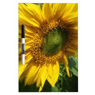 Sunflower Dry Erase Whiteboard