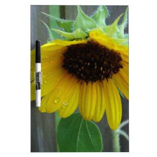sunflower Dry-Erase board
