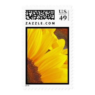 Sunflower Duet Postage