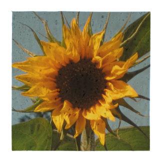 Sunflower - Echo Friendly Cork Coasters x 4