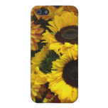 Sunflower Fall Flowers iPhone 5/5S Cases