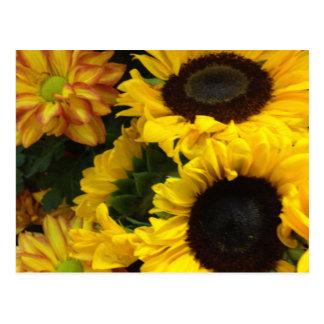 Sunflower Fall Flowers Postcard