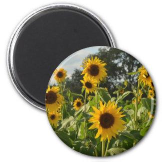Sunflower Field 2 Inch Round Magnet
