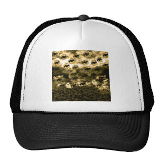 Sunflower field and cat hat
