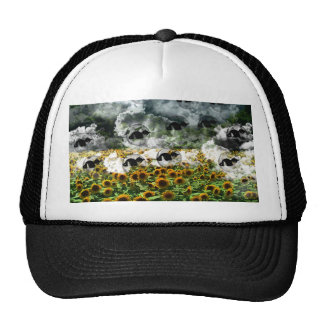Sunflower field and cat hats