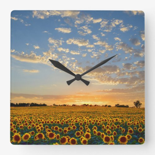 Sunflower Field at Sunset Square Wall Clock