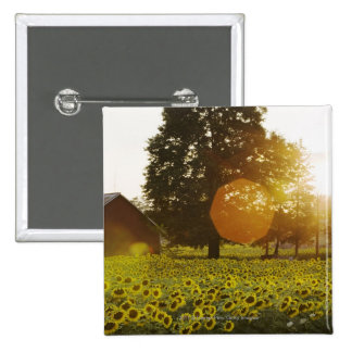Sunflower Field At Sunset With A Barn 2 Inch Square Button