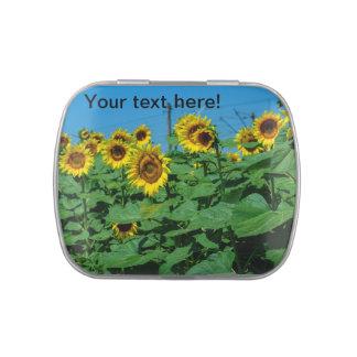 Sunflower field jelly belly tin