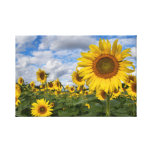 Sunflower Field Canvas 11.75 in x 18 in. Canvas Print