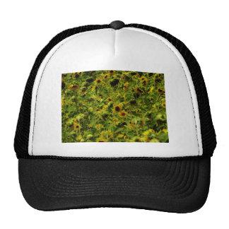 Sunflower field mesh hats