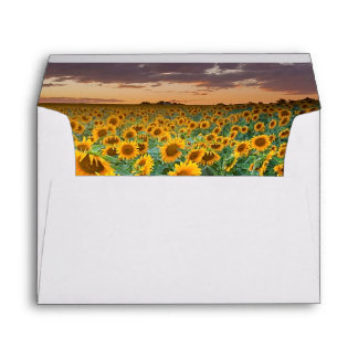 Sunflower Field in Longmont, Colorado Envelope
