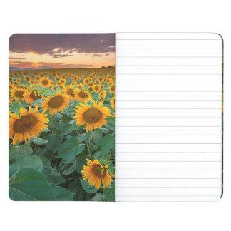 Sunflower Field in Longmont, Colorado Journal