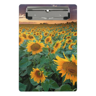 Sunflower Field in Longmont, Colorado Mini Clipboard