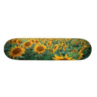 Sunflower Field in Longmont, Colorado Skateboards