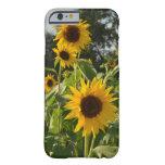 Sunflower Field iPhone 6 Case
